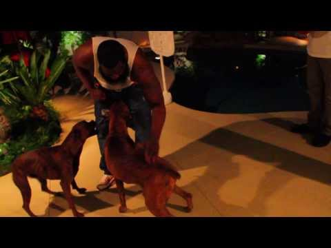 """Dark Lo feat. Ar-Ab """"The Realist"""" Official Video"""