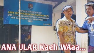 Berbahaya Evakuasi Ular Di Upt Disdukcapil Kroya Kabupaten Cilacap