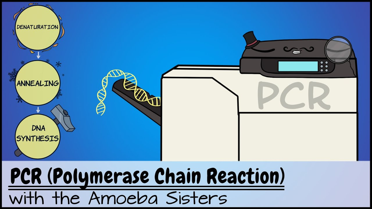 Download PCR (Polymerase Chain Reaction)