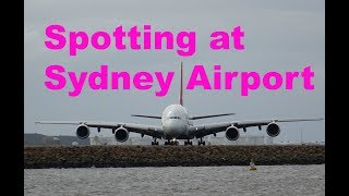 What can you see in an hour of plane spotting at Sydney airport?