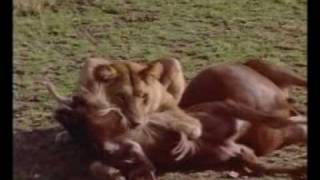 Afryka - Serengeti part 1 of 4