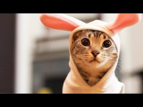 Thumbnail for Cat Video Easter Bunny Kitty
