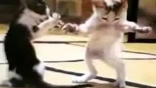 Halay çeken kediler (montage vol 1)