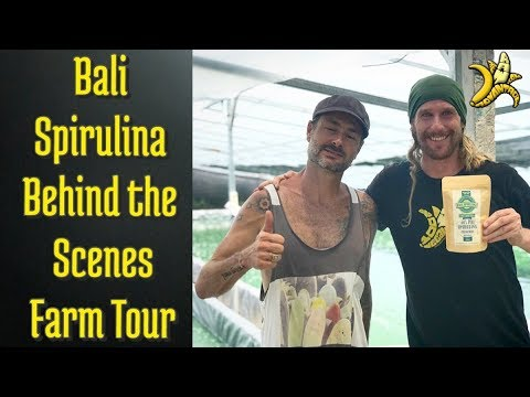 """Bali Spirulina"" Behind the Scenes Farm Tour!"