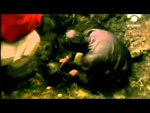 Segunda Guerra: gran fuga de Stalag Luft III