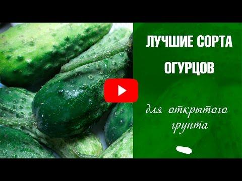 Сорта огурцов для открытого грунта ✅ Выбираем лучшие семена огурцов❗