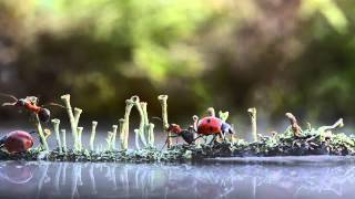 A Magical Fairytale World Of Snails By Vyacheslav Mishchenko