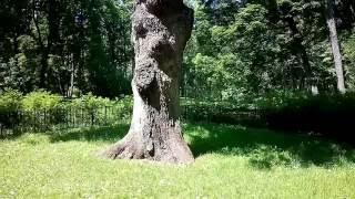 видео Спасское-Лутовиново - усадьба Тургенева