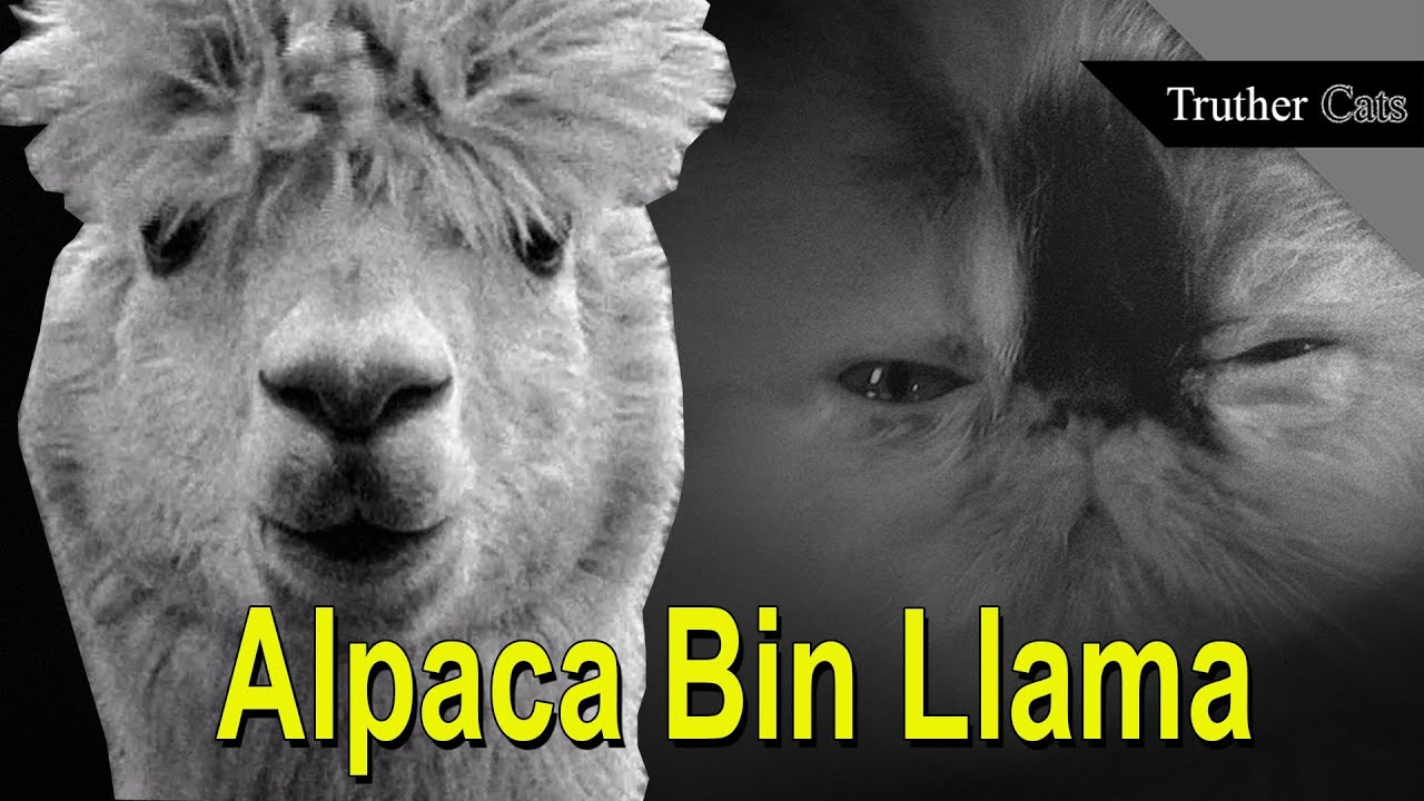 are alpacas evil the truth about the terrorists in our own