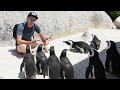 เล่นกับเพนกวินที่แอฟริกา!!! โคตรสนุก!