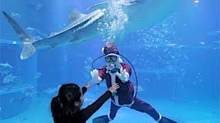 大阪市港区の水族館「海遊館」で1日、クリスマス気分を盛り上げようと...