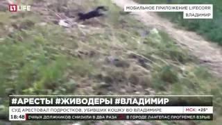 Суд арестовал подростков, убивших кошку во Владимире