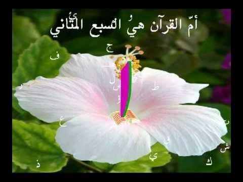 ما  القرآن العظيم في الحجر؟  د نبيل أكبر