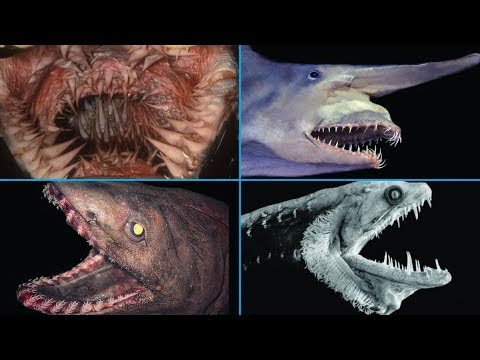 12 Terrifying Mouths Of The Deep Sea