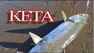 Кета  Охотское море  Сахалин 2018 / fishing