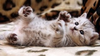 Adorable little cats - Cute and funny kitten compilation