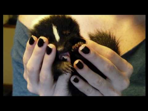 Baby Skunk, Stinky I Love You!
