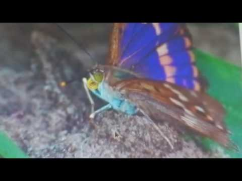 Фото бабочек