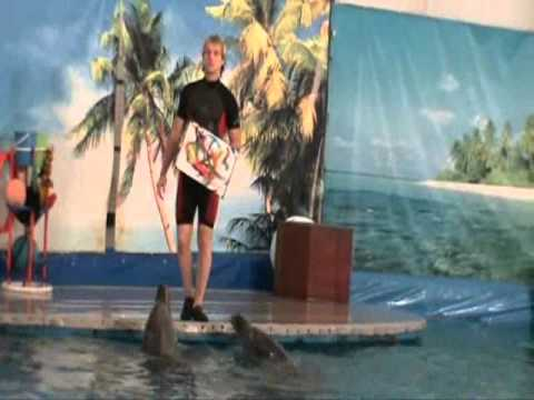 The Dolphin Show in Russia