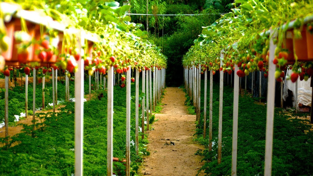 Talking About Urban Farming