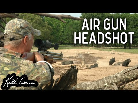 AIR GUN Hog Hunting Using THERMAL