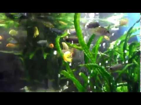 Akvaria-Mádl
