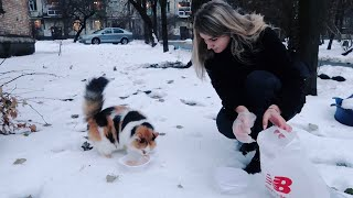 Кормлю бездомных котиков и собачек