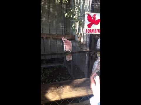 Bird in Australia saying hello :)