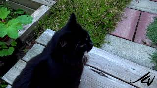July 15 Vlog -  ft Ralph the cat with Sony night vision AX700 -  YouTube