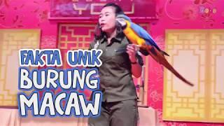 Fakta Unik Burung Macaw