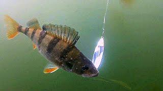 Рыбалка на спиннинг, много камер и...Что-то пошло не так!