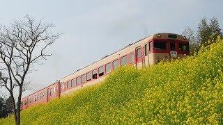 春爛漫の《いすみ鉄道》を走行する国鉄色急行列車とムーミン列車
