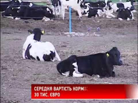 Фермири козів відео фото 696-804