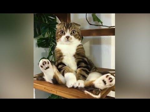 Lustige Tiervideos Auf Youtube