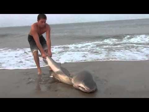 Shark caught in Delaware