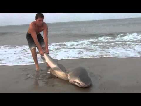 Shark caught in Delaware