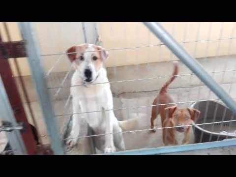 Some of the dogs at the AID sheler