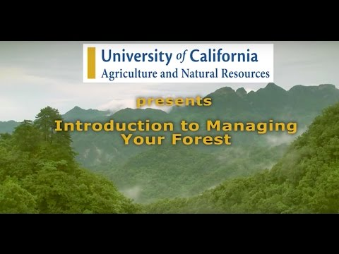 Starting Your Forest Mgmt Plan: Introduction to Forest Management