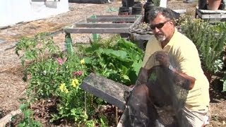 How To Make Sun Shade Covers For Vegetable Gardens : Vegetable Gardening 101