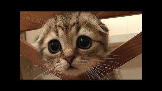 Самые милые и смешные животные! Самое милое видео с животными!