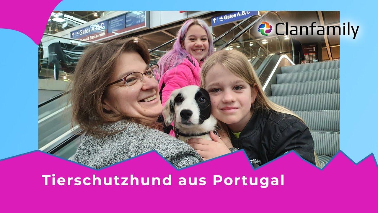 Tierschutz Portugal