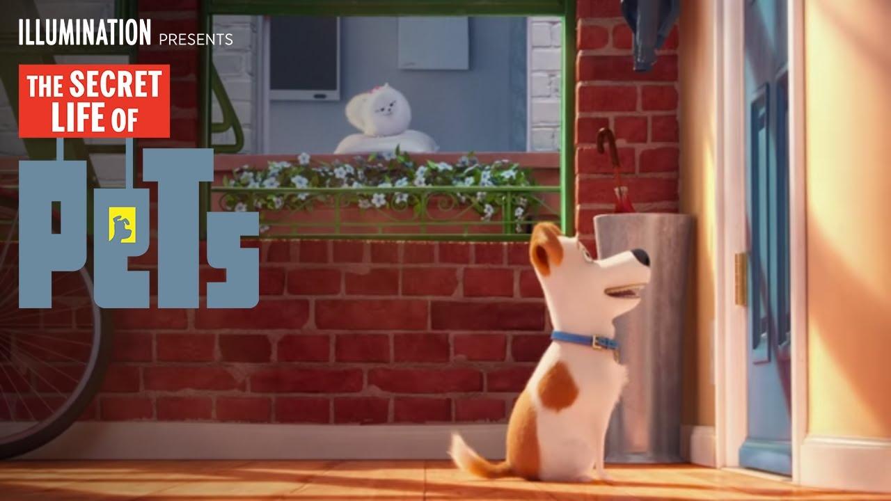 The Secret Life of Pets - Meet Max & Gidget (HD ...