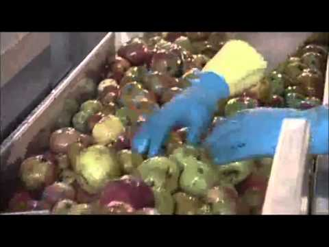 Proceso y elaboración de la sidra