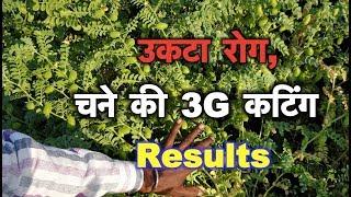 उकटा रोग, 3G कटिंग Result, जैविक खाद how to control Fusarium wilt