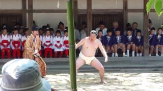 20100616大山祇神社 御田植祭3 (一人角力)