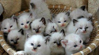 Самые крутые, веселые и прикольные коты, котики, cats FUNNY CAT VIDEOS