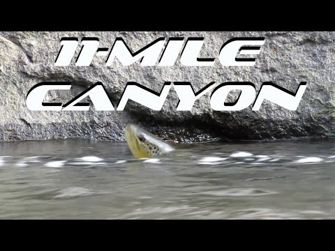 Fly Fishing Eleven Mile Canyon South Platte River