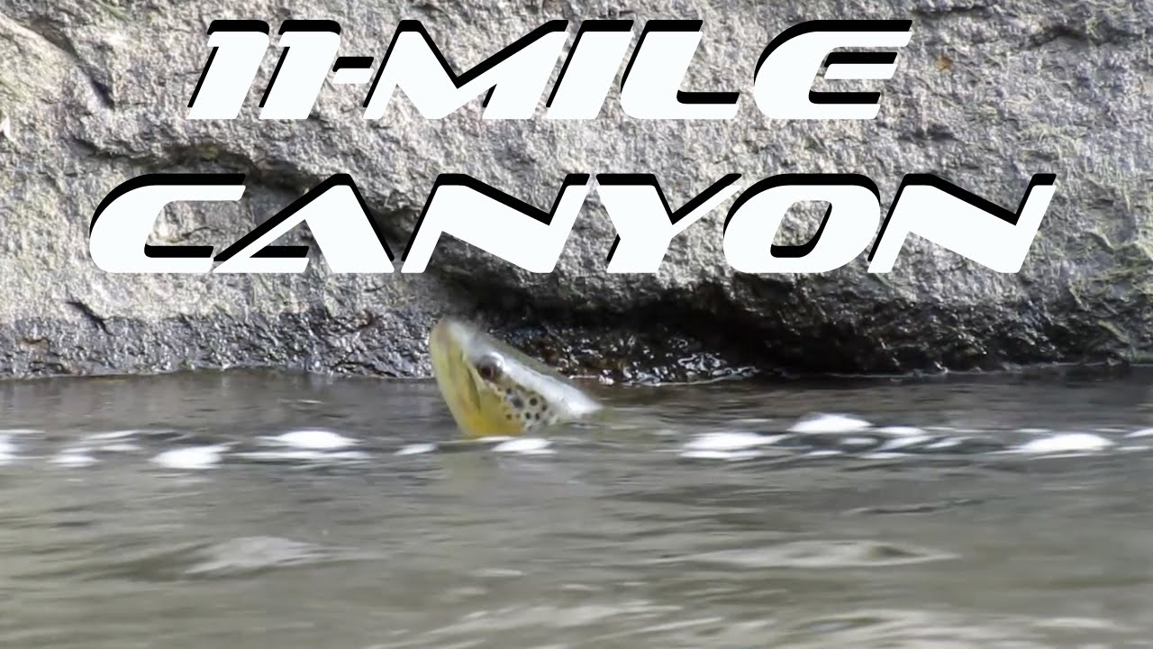 Fly Fishing Eleven Mile Canyon South Platte River Youtube