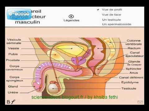 Si on peut prendre un bain de vapeur dans le bains au psoriasis