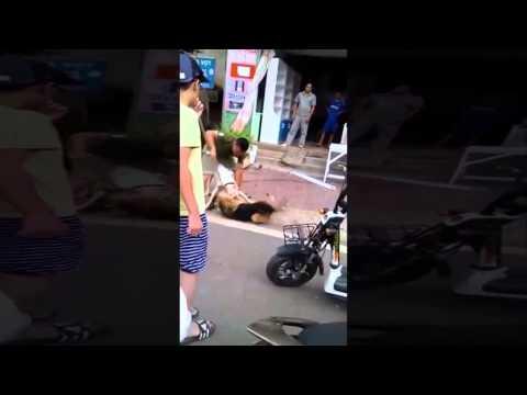 Chó Pitbull cắn nhau với Béc Giê